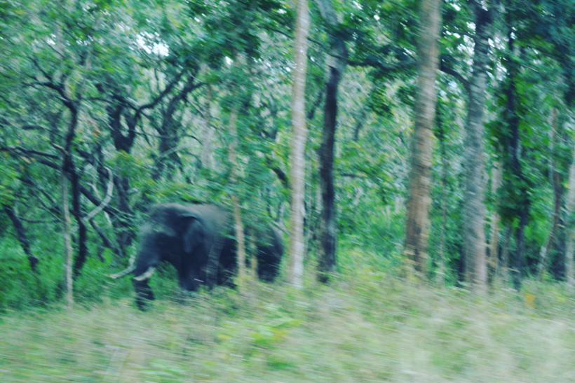 Wild Elephant, Bandipur National park